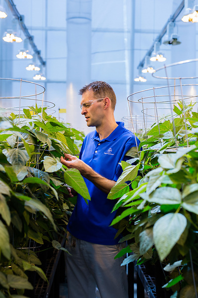 April 19, 2016. Durham, North Carolina. <br /> Kurt Boundonck, the Greenhouse Group Leader for Research Triangle Park, poses with plants from Greenhouse 5. He oversees the growth of new plant strains as the modified traits are tested in various environments. It takes an average of 15 years and $130,000,000 to bring one seed and trait to market. <br />  The Bayer Crop Science Research Triangle Park main campus houses 2 large greenhouses which are used to test grow many of the seeds that are modified nearby at the Innovation Center. Another greenhouses is currently under construction.