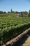USA, Oregon, Willamette Valley, a red farm house in the vines next door to the Sokol Blosser Winery, Dayton