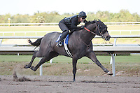 #100Fasig-Tipton Florida Sale,Under Tack Show. Palm Meadows Florida 03-23-2012 Arron Haggart/Eclipse Sportswire.
