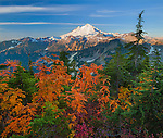 Mount Baker-Snoqualmie National Forest, WA: Mount Baker from Artists Ridge Trail with huckleberries and mountain ash in fall color.