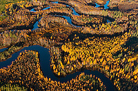 Athabasca Delta boreal forest and wetlands.