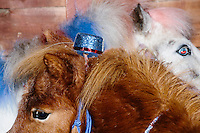Patriotic-themed miniature horses stand in a barn during a campaign event for satirical presidential candidate Vermin Supreme at Ten Rod Farm in Rochester, New Hampshire. Supreme's platform advocates a pony-based economy, using zombies to solve the energy crisis, and other outlandish ideas. Supreme has been on the New Hampshire primary ballot in 2008 and 2012, though he began running for president in 1992. Vermin Supreme will be on the Democratic party ballot in the 2016 New Hampshire primary.
