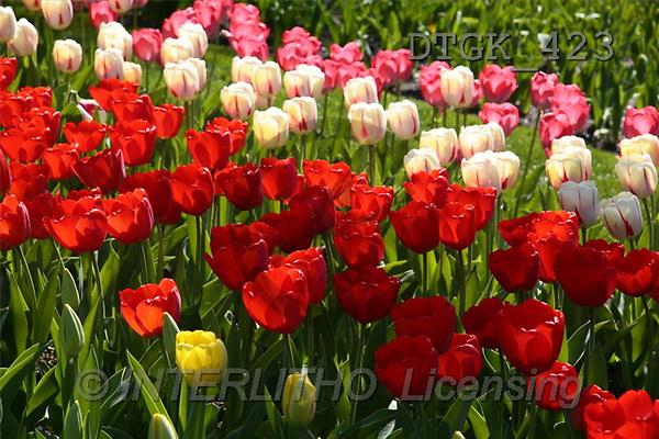 Gisela, FLOWERS, photos(DTGK423,#F#) Blumen, flores, retrato