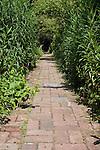 Pathway in a Charleston Garden