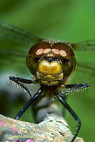 1O06-003z  Dragonfly - adult, head and eyes