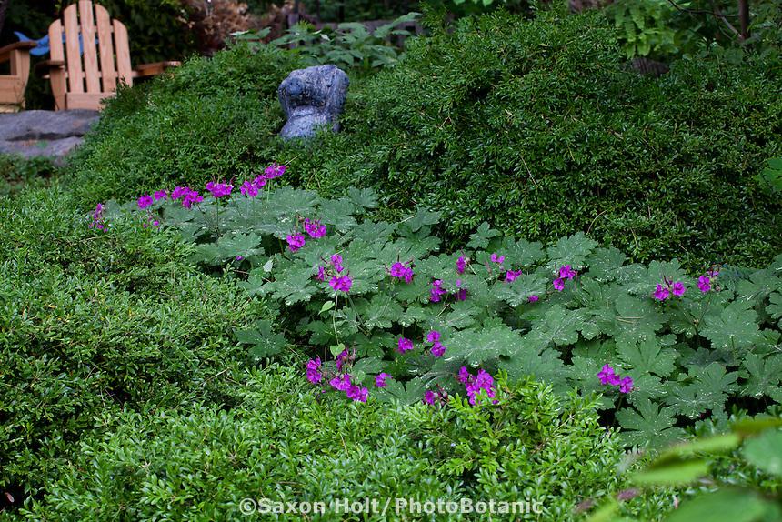 holt_1104_072.CR2 | PhotoBotanic Stock Photography Garden Library