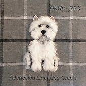 Simon, REALISTIC ANIMALS, REALISTISCHE TIERE, ANIMALES REALISTICOS, innovative, paintings+++++SharonS_Westie,GBWR223,#a#, EVERYDAY dogs,breeds of dog,
