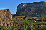 A tobacco farm and barns for drying leaves at the base of mountains near Vinales, Cuba