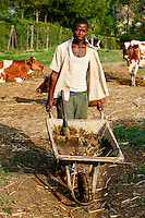 KENYA, County Kakamega, Bukura, village Eshibeye, milk cow farm, the dung is used in the biogas plant / KENIA, County Kakamega, Bukura, Dorf Eshibeye, Milchkuh Farm, Kuhdung wird in der Biogasanlage verwendet