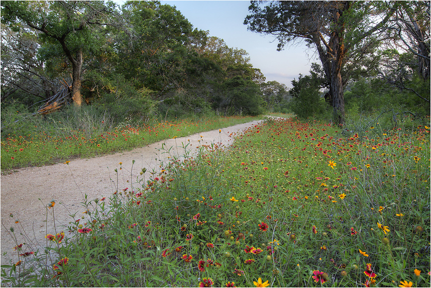 When you start out on the trail from the headquarters at Westcave Preserve, you follow a nice path. In the spring, this path is filled with colorful wildflowers that bloom through this sanctuary as well as the Texas Hill Country. As you stay on this path, you'll eventually find yourself on a dirt path that start dropping into a valley.