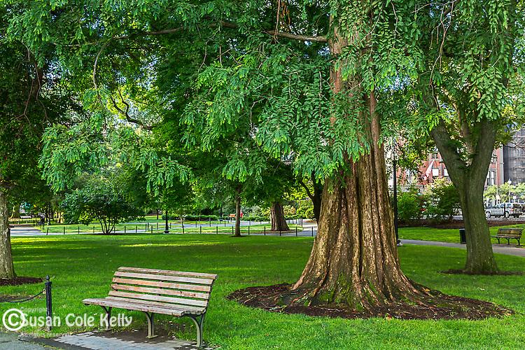 Morning in the Public Garden, Boston, Massachusetts, USA