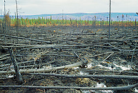 Forest fire burn along the James Dalton highway, Alaska