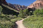 Bright Angel Trail near Indian Gardens, Grand Canyon National Park, Arizona .  John leads hiking and photo tours throughout Colorado. . John offers private photo tours in Grand Canyon National Park and throughout Arizona, Utah and Colorado. Year-round.