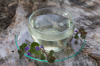 Gundermann-Tee, Tee, Kräutertee, Heiltee; Blütentee aus Gundermann. Gewöhnlicher Gundermann, Efeublättriger Gundermann, Glechoma hederacea, Alehoof, Ground Ivy, tea, herbal tea, herb tea, Lierre terrestre