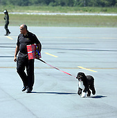 The Obama's Portuguese water dog Bo is walked by an aide after disembarking from a helicopter at Martha's Vineyard, Massachusetts Thursday, August 19, 2010. The President was not visible when he disembarked his helicopter. Michelle, Sasha, and Malia Obama landed on the island about 2 1/2 hours before the President. The Obama's are vacationing on the island Aug 19-29. .Credit: Vincent DeWitt-Pool via CNP