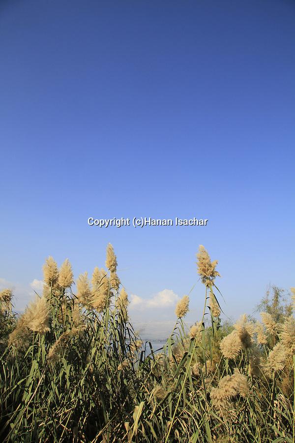 Israel, Ein Rakkath by the Sea of Galilee