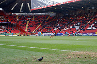 A pigeon oversees play during the Sky Bet League 1 match between Charlton Athletic and Fleetwood Town at The Valley, London, England on 17 March 2018. Photo by Carlton Myrie.