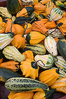 Winter squash varities in bins at a farm in Snohomish County, Washington State.