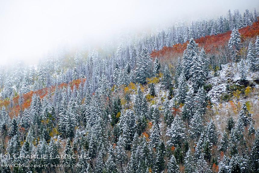 First snowfall in Beaver Creek. Uinta Mountains, Utah.  October 2011.