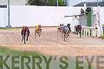 5503- 5519.Sullivan Barrell (No 1) just passes the line to win the Tote Trio Pool N3 525 Race at Kingdom Greyhound Stadium, Tralee, on Friday night..