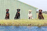 Texas Duck Dogs. 9.2014