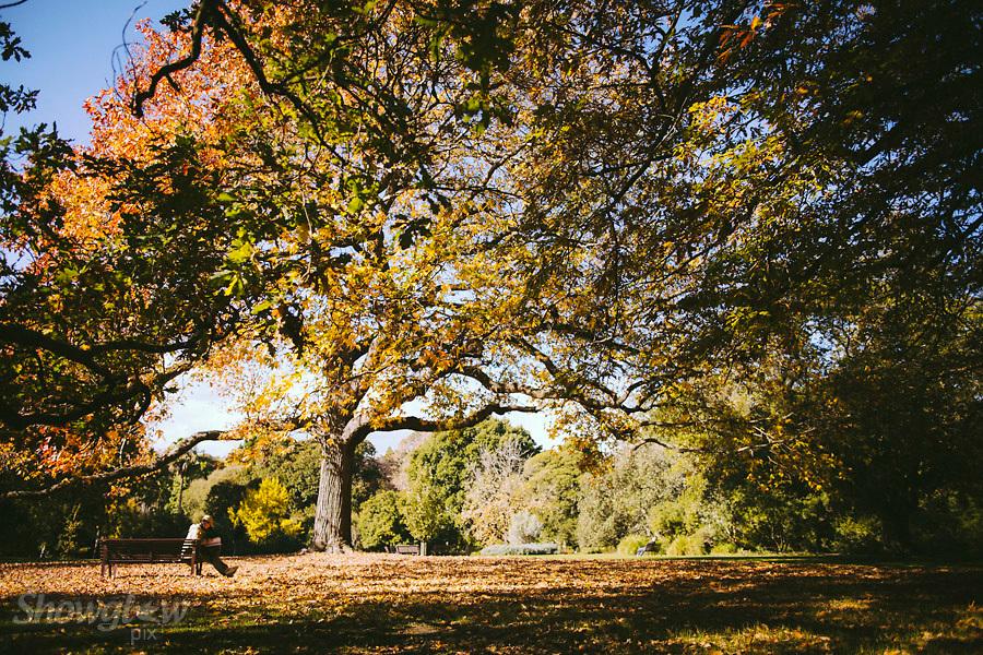 Image Ref: M269<br /> Location: Royal Botanical Gardens, Melbourne<br /> Date: 03.06.17