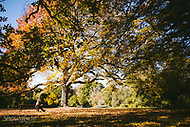 Image Ref: M269<br />