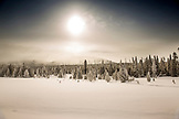 USA, Wyoming, Yellowstone National Park, snowy landscape of trees covered in frost, near Monument Geyser Basin
