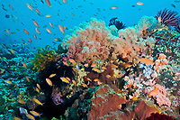 A healthy reef off of Nusa Penida near Bali, Indonesia, Indian Ocean