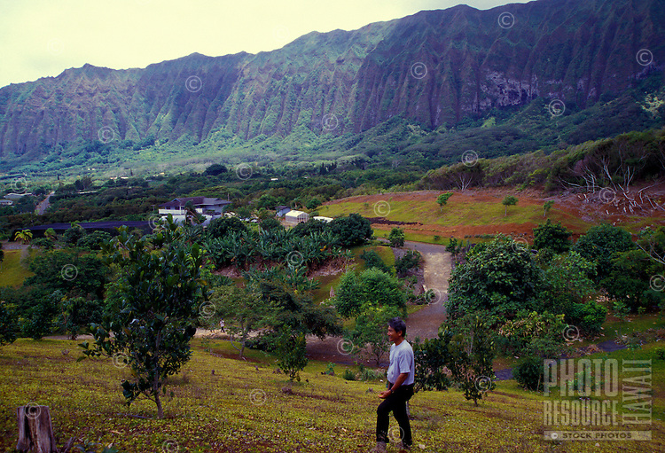 Frankie Sekiya with a view of his 7 acres in waimanalo, Oahu. A fruit tree specialist and owner of Frankie's Nursery.