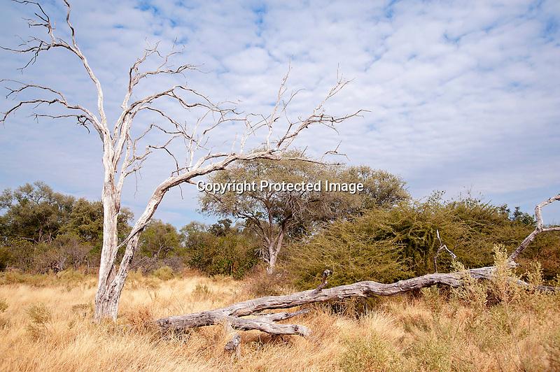 Landscape in Moremi Animal Reserve in Botswana in Africa