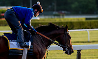 ELMONT, NY - JUNE 08: Blended Citizen gallops around the track as horses prepare on Friday for the 150th running of the Belmont Stakes at Belmont Park on June 8, 2018 in Elmont, New York. (Photo by Scott Serio/Eclipse Sportswire/Getty Images)
