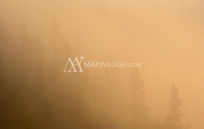 A foggy morning at Swan Lake Flats.