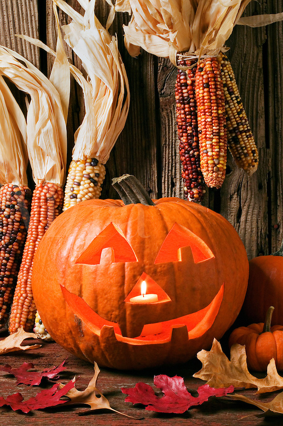 Jack O Lantern still life, with Indian corn, Halloween