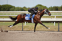 #82Fasig-Tipton Florida Sale,Under Tack Show. Palm Meadows Florida 03-23-2012 Arron Haggart/Eclipse Sportswire.