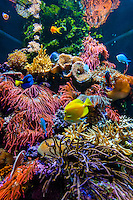 California-San Francisco-Aquarium of the Bay