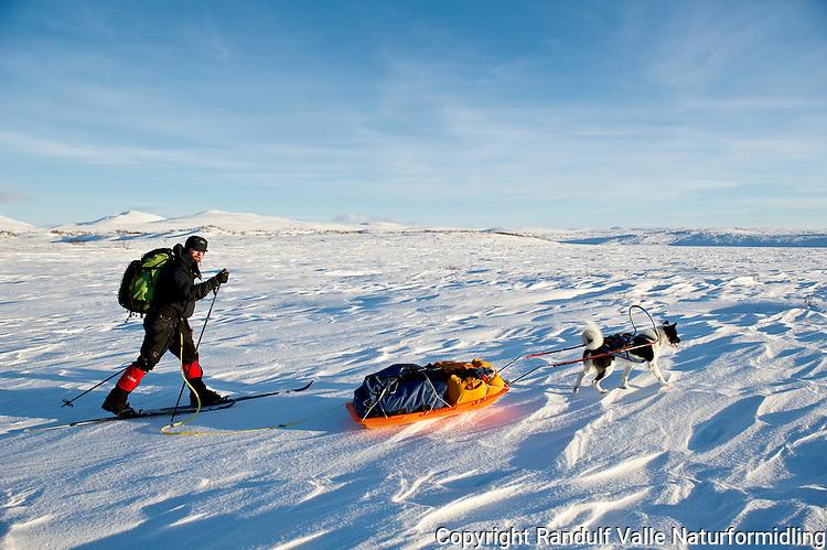 Mann og grønlandshund på vidda i Finnmark en flott vinterdag. ---- Man and greenland dog in Finnmark a winter day.