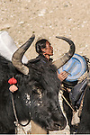 A Tibetan Yak Driver Framed by the Horns of a Yak Near Cho Oyu in the Chinese Himalaya.