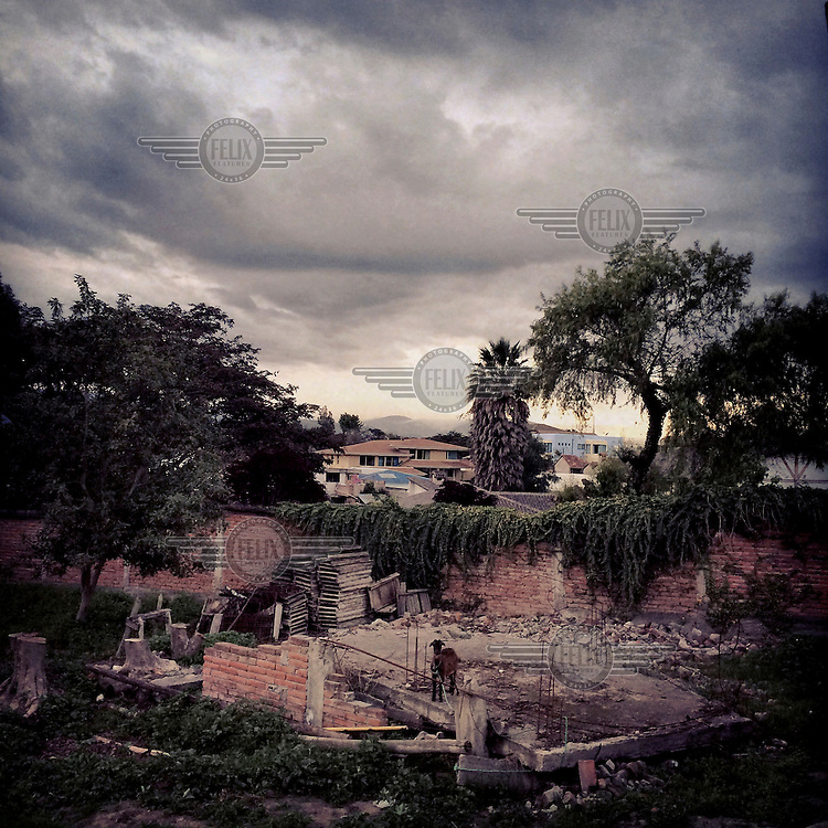 A goat stands in the ruins of a house in Chiviqui.