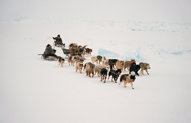Chukchi hunters, travelling by dog sled near Cape Dezhnev.Chukotskiy Peninsula Chukotka, Siberia, Russia.