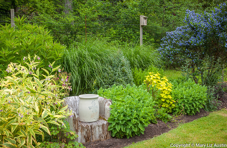 Vashon Island, WA:  Red Wing crock set on a carved stump in a perennial  garden featuring 'Axminster Gold' comfrey, 'Autumn Joy' sedum, Joe Pye weed and ceanothus. Jonathan Morse designer and garden.