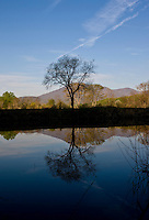 A lone tree is reflected off of the Rivanna River in Albemarle County, VA. Photo/ Andrew Shurtleff
