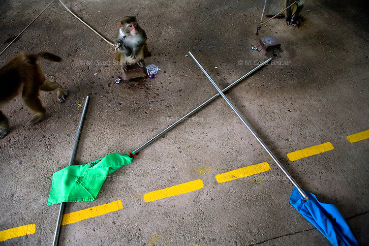 "The ""monkey honor guard"" waits to begin a show for tourists at Monkey Island near Lingshui, Hainan, China."