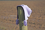 Purple mauve child's bonnet hat lost placed on wooden post in field