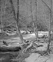 &quot;Forest And Creek&quot; Great Smoky Mountains National Park, Tennessee<br /> <br /> This photo shows the good water and clean forest that are common in the Great Smoky Mountains National Park. It works quite well in black and white, especially as a large print where image crispness can add to the mood more strongly than in a small image.