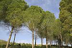Israel, Upper Galilee, Naftali Mountains forest