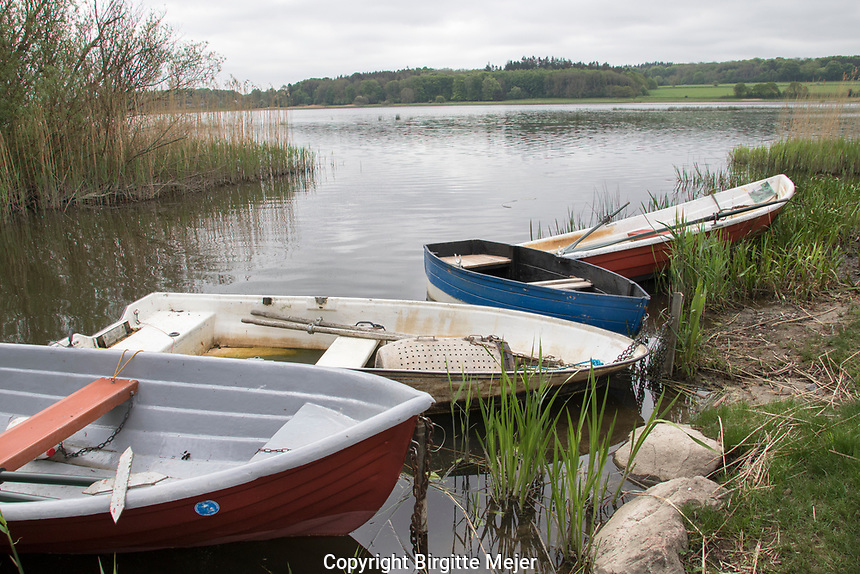 A cloudy Day in Denmark by a lake, where the rowing boats, used for fishing, are ashore. In the background fields and forest.