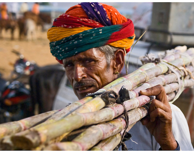 A man carrying sugar cane stocks on his shoulder at the Pushkar Fair is wearing a mult-colored turban, an earing in his ear and the sheen on his face speaks to the heat of the day.