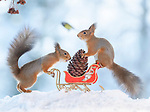 Festive Red squirrels with miniature Christmas scenes