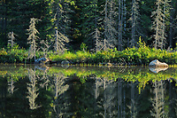 Reflection at Graphic Lake, Near Kenora, Ontario, Canada